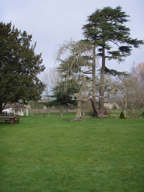 File Nice Trees In The Garden Geograph Org Uk 716157 Jpg