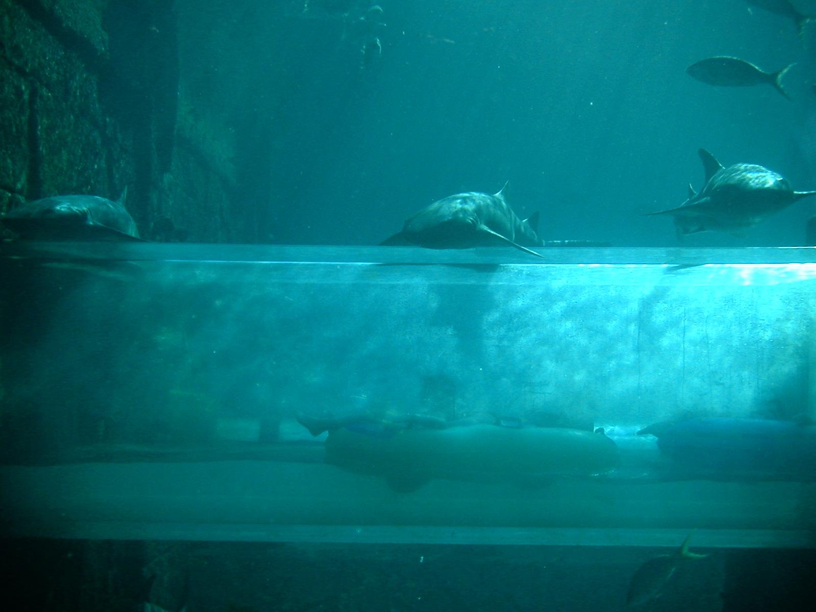 underwater water slide. File:Nurse Sharks Mayan Temple Slides At Atlantis.jpg Underwater Water Slide