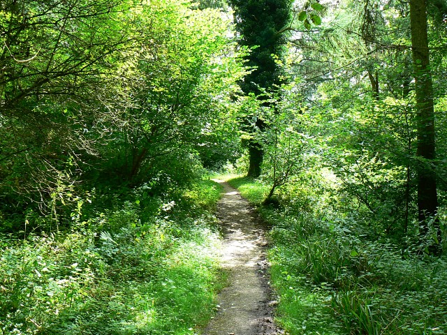 Path through Woodchester Park - geograph.org.uk - 931897