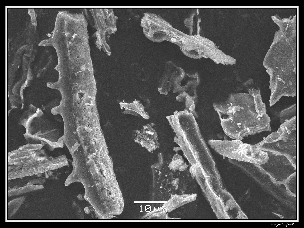Microscope balayage