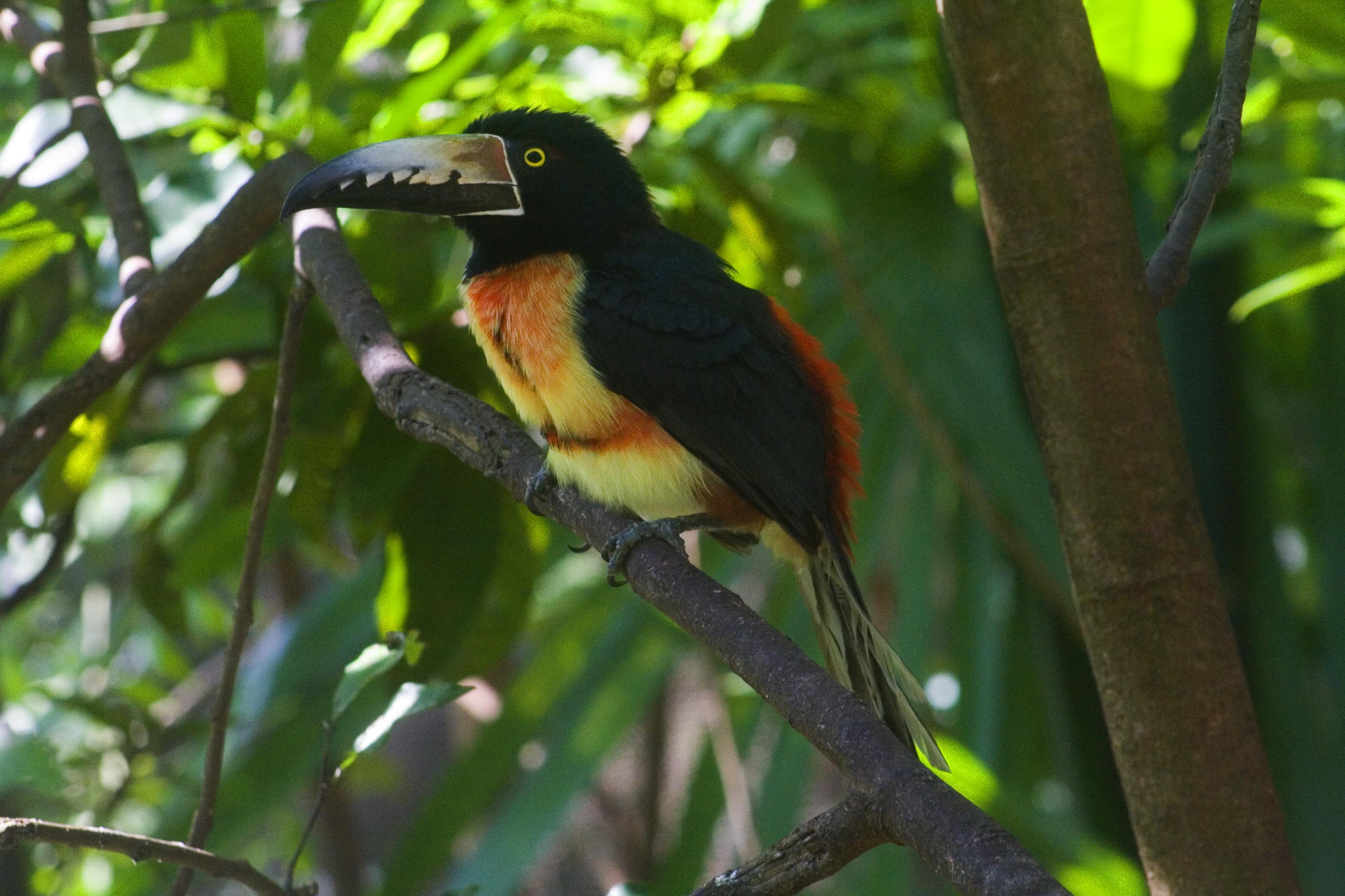 Fotos de animales en extincion en mexico 92