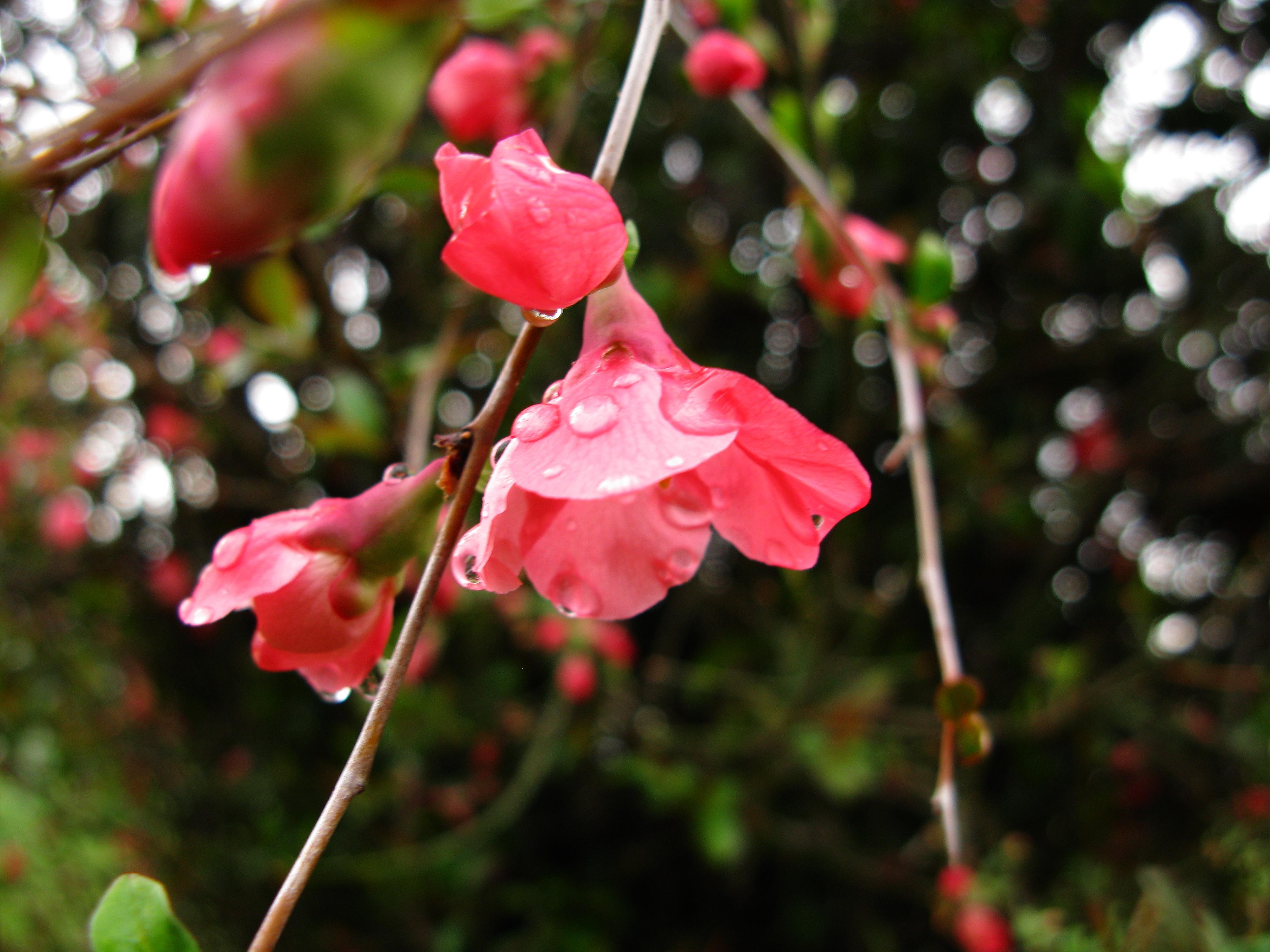 Filered Spring Flower Bush West Virginia Forestwanderg