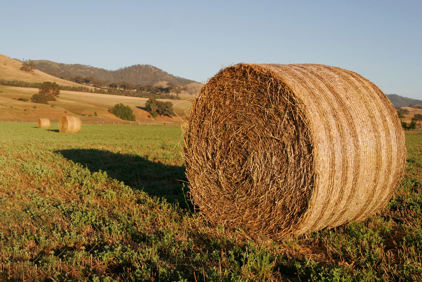 Round_hay_bale_at_dawn02.jpg