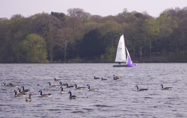 Sailing on the Mere - geograph.org.uk - 1251641