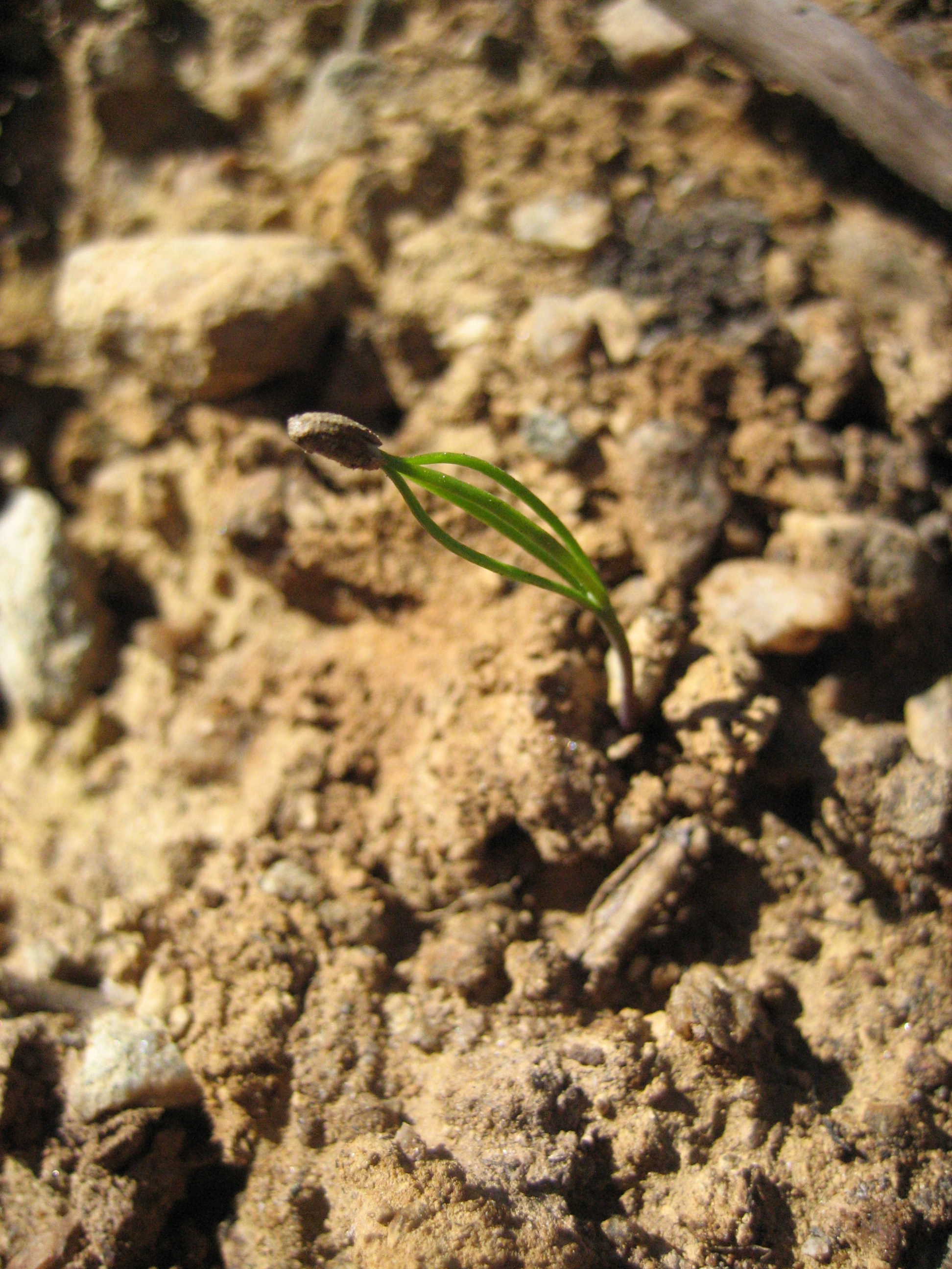 Image Result For Seed And Sower