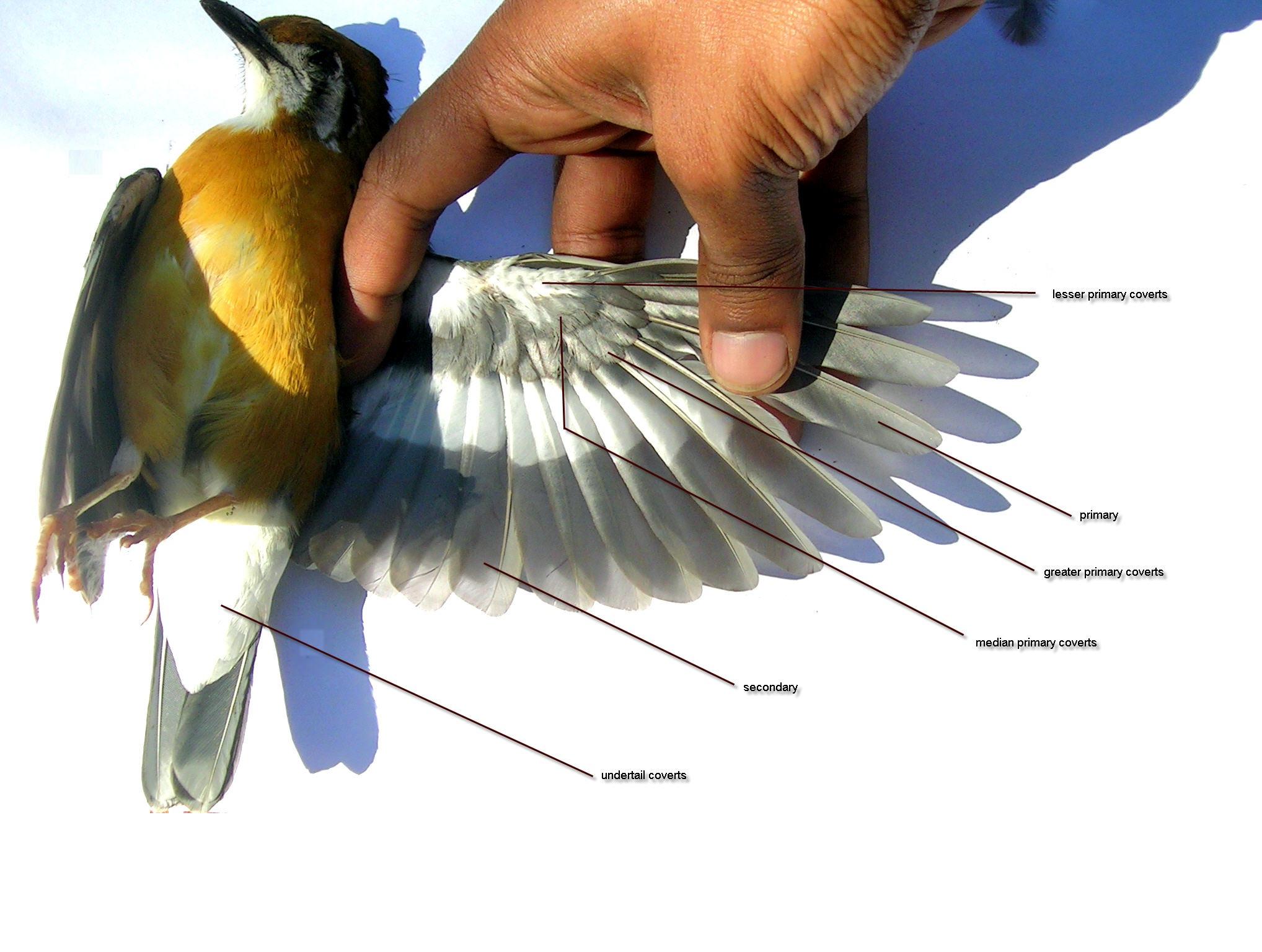 один строения крыла птицы фото был бессмертным