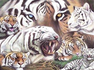 File:Tigers-Wiki.jpg