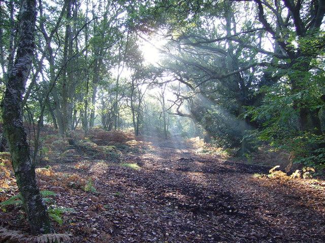 Woodland copse on Yateley Common - geograph.org.uk - 646727