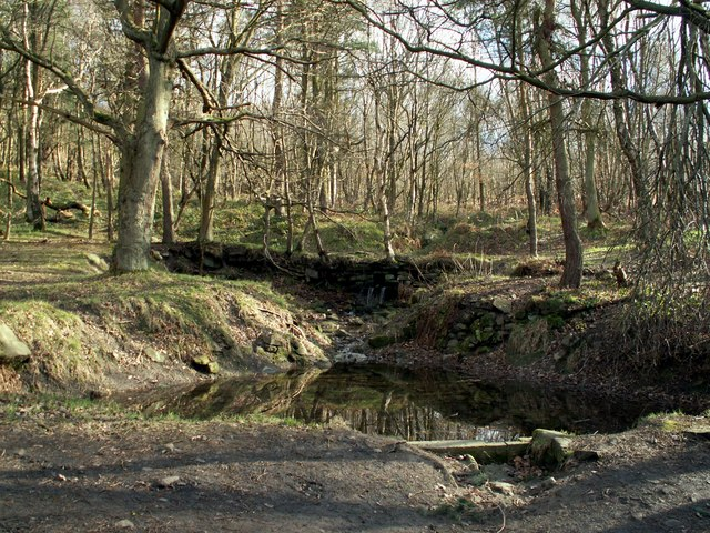 A pond in Wharncliffe Woods - geograph.org.uk - 713691