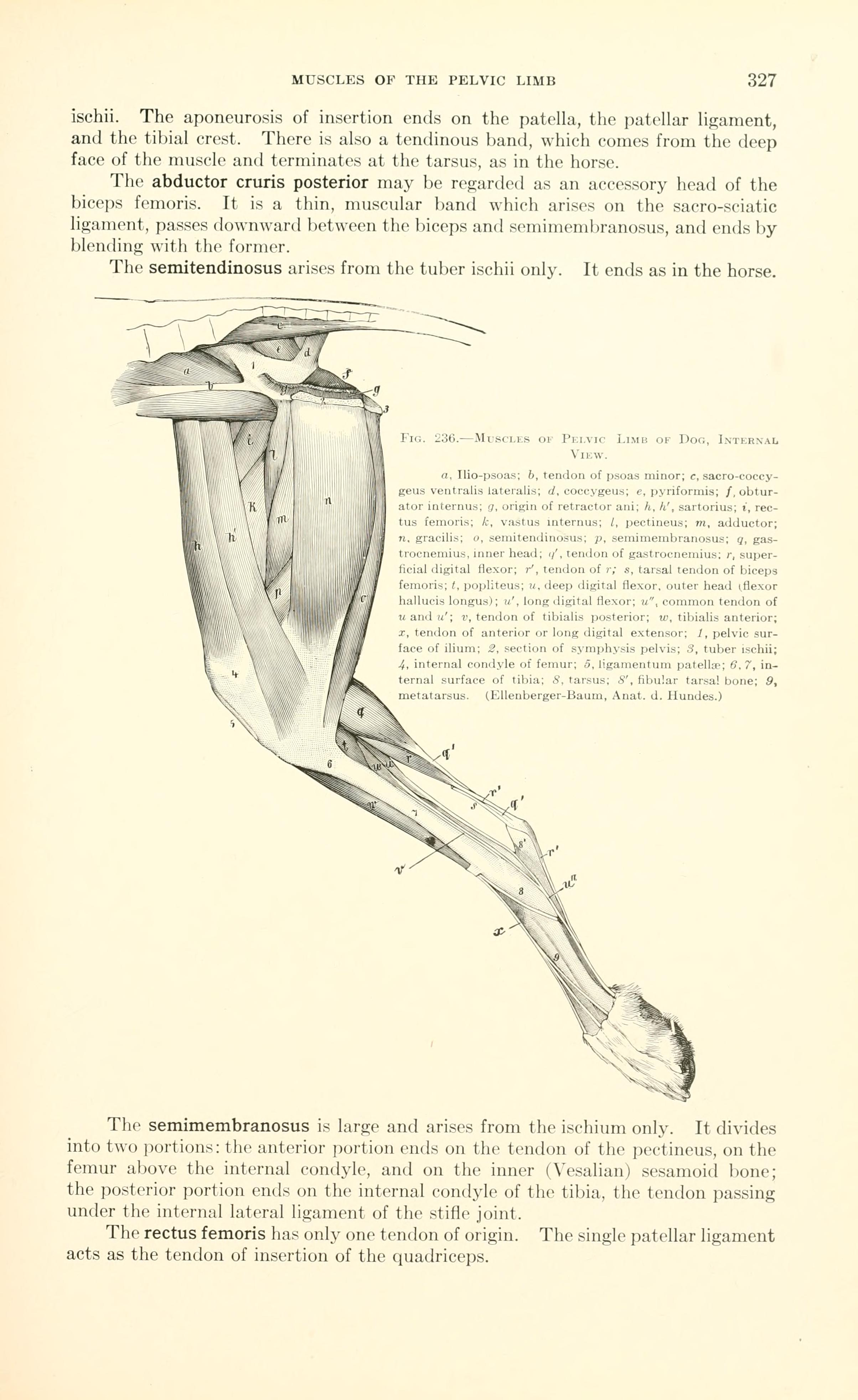Filea Text Book Of Veterinary Anatomy Page 327 Bhl18587451g