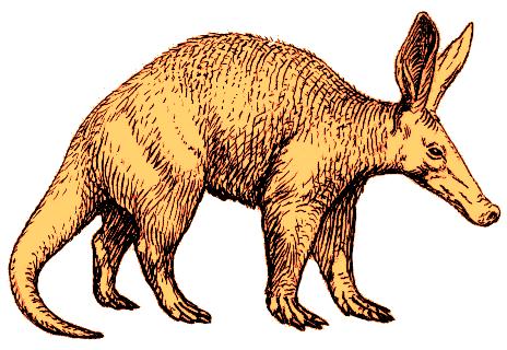 Aardvark2 (PSF) colourised.png