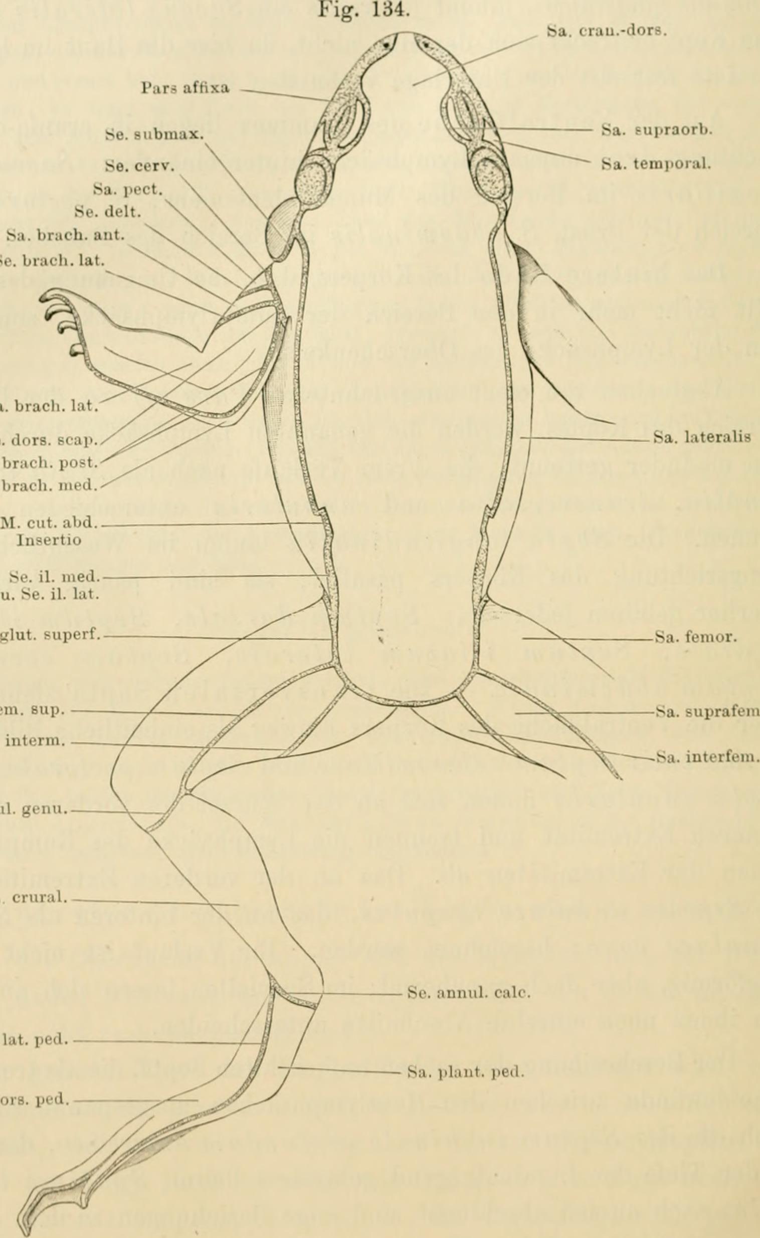 Erfreut Anatomie Eines Frosches Galerie - Anatomie Ideen - finotti.info