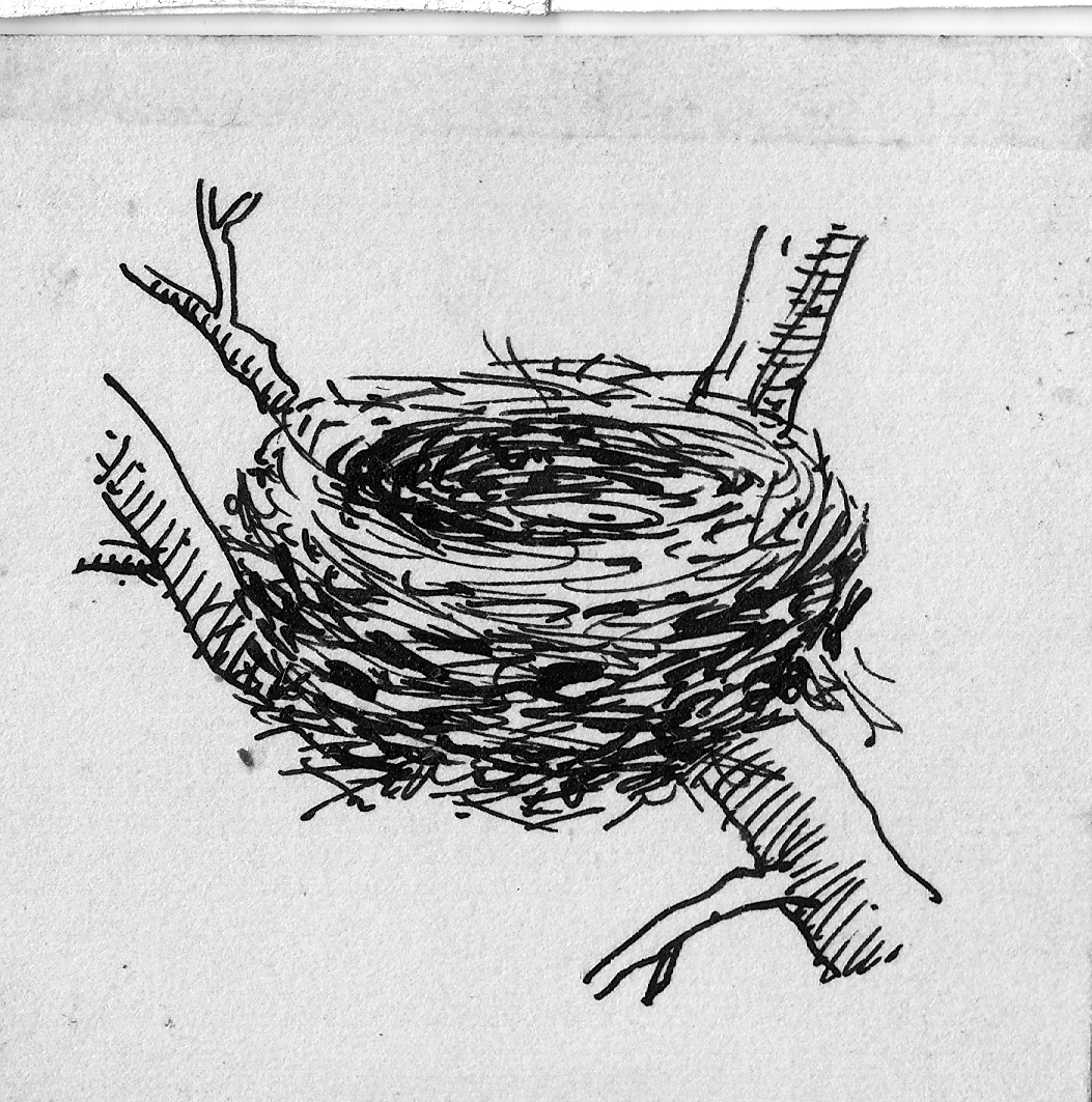 Line Drawing Nest : File bird s nest line art psf n cropped