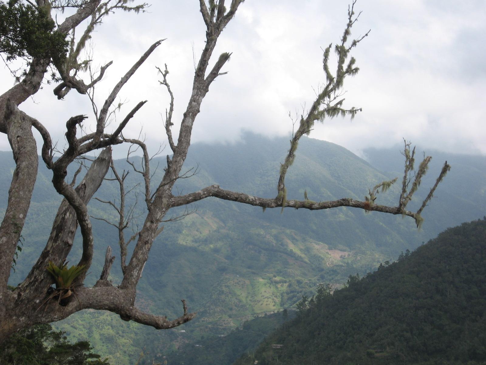 Blue Mountains (Jamaica) - Wikipedia