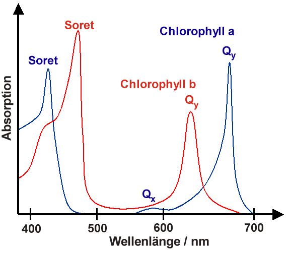 File:Chlorophyll spectrum.png - Wikimedia Commons