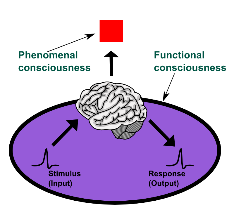 Consciousness functional consciousness refers to access consciousness