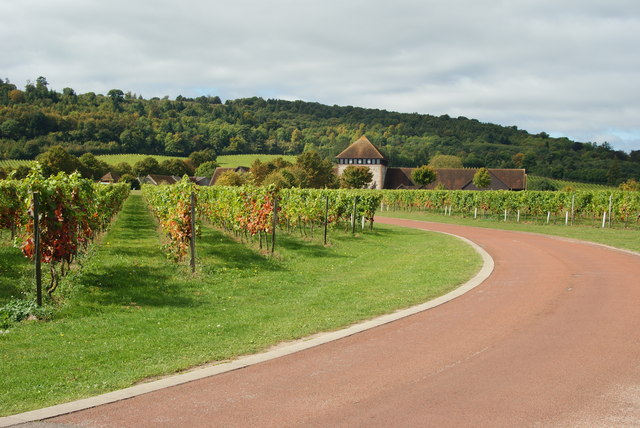 Denbies Vineyard, Dorking, Surrey - geograph.org.uk - 1503658