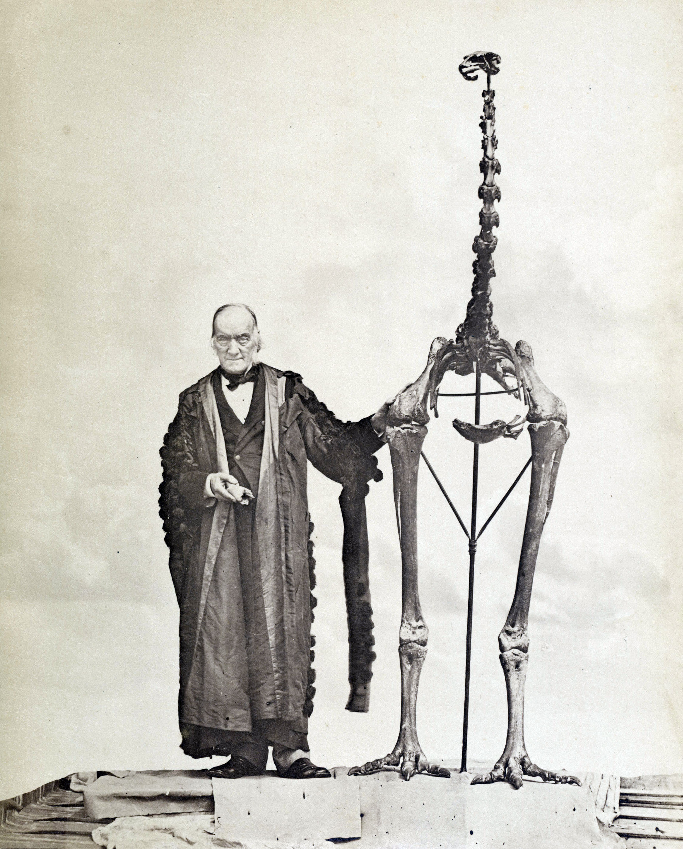 Richard Owen with the skeleton of a Moa Ungulate Habitat