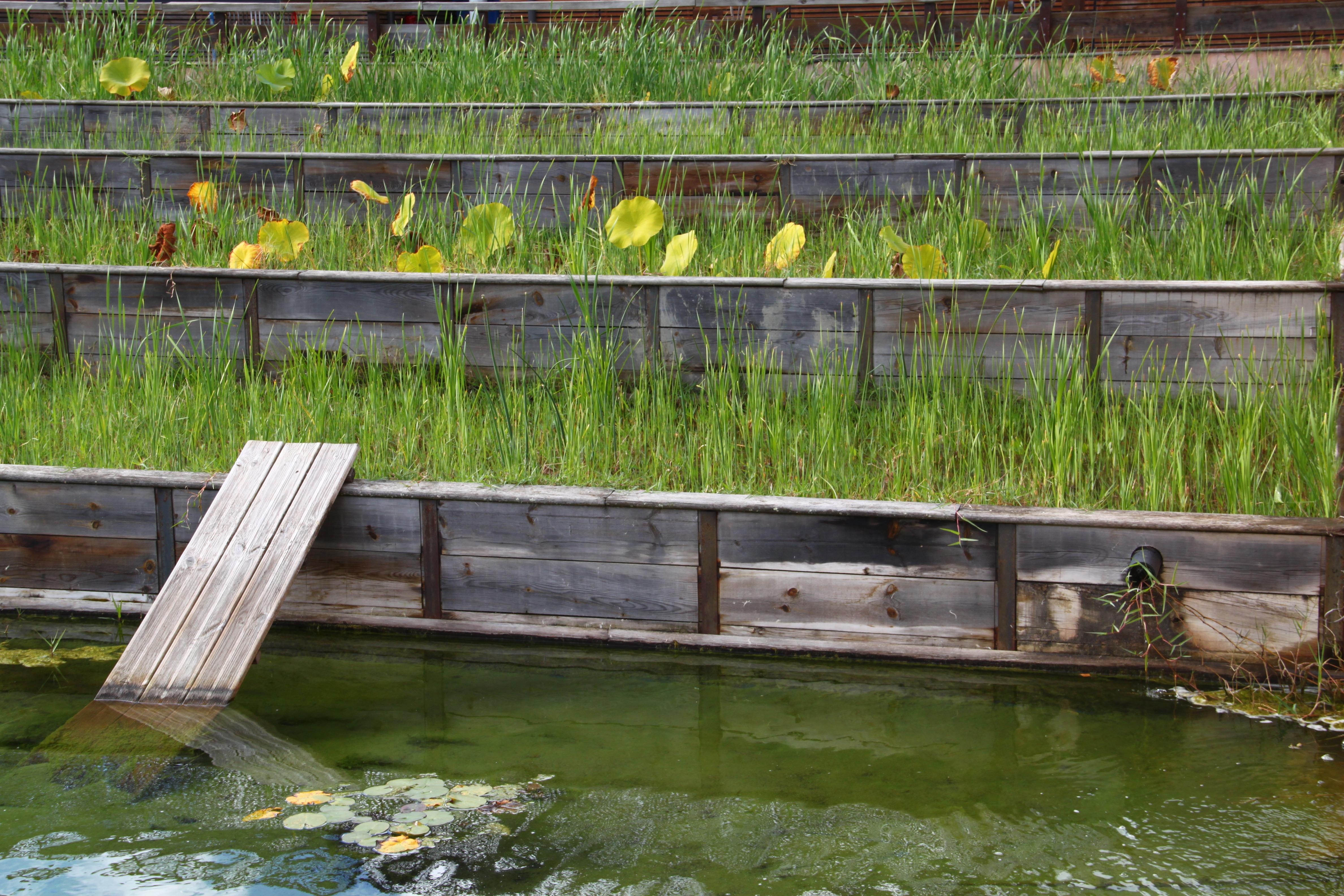 Fichier eau tag e jardins du mus um toulouse jpg wikip dia - Les jardins du museum toulouse ...