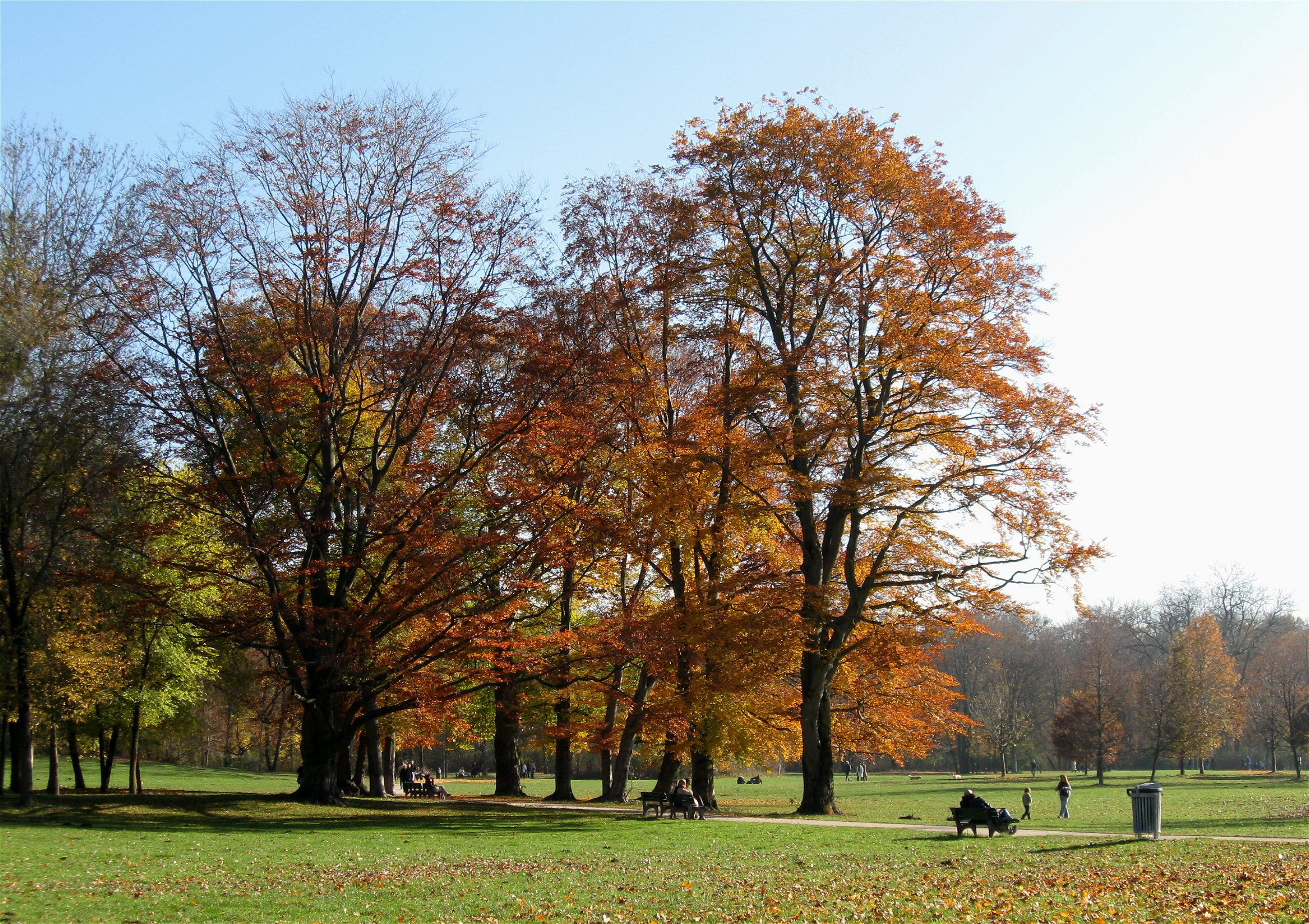 file englischer garten herbst wikimedia commons. Black Bedroom Furniture Sets. Home Design Ideas