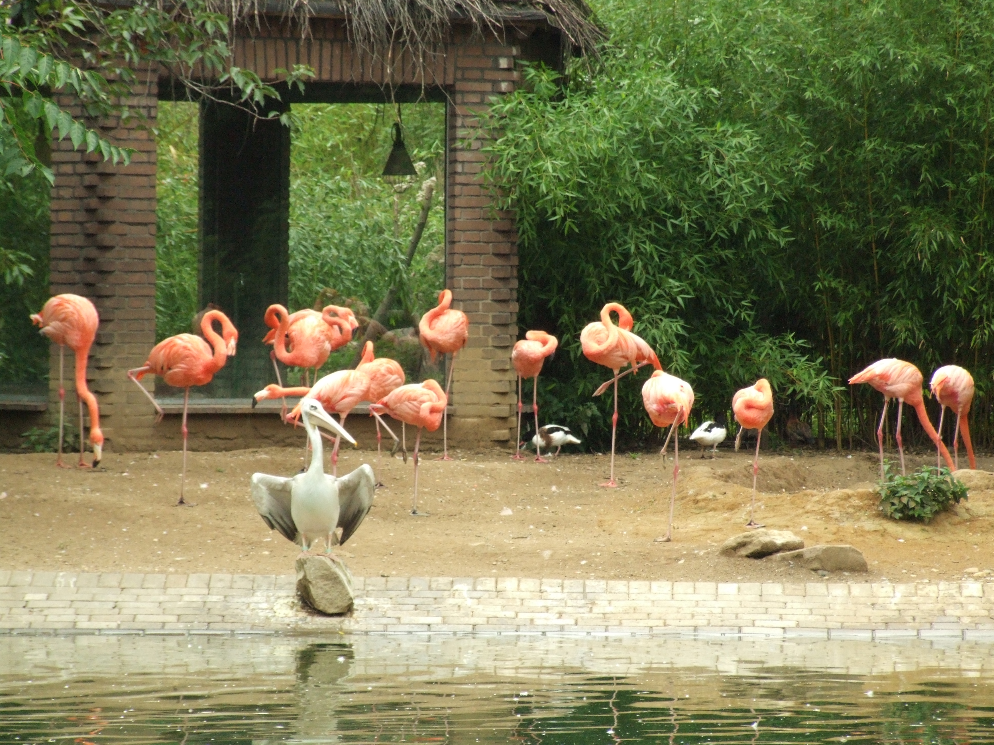http://upload.wikimedia.org/wikipedia/commons/b/bb/Flamingos_und_Pelikan.jpg