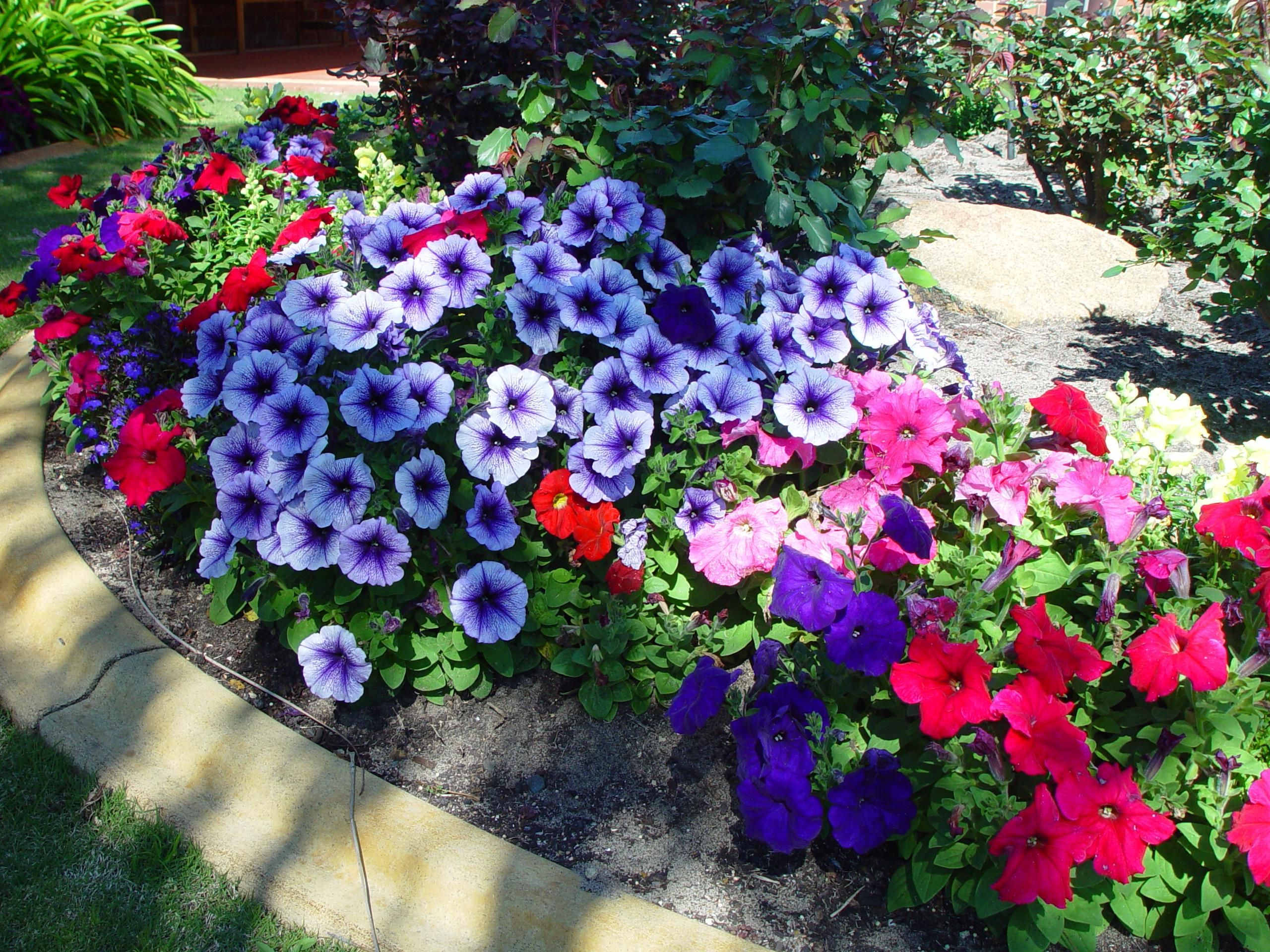 File Flowers In Garden 1 Jpg