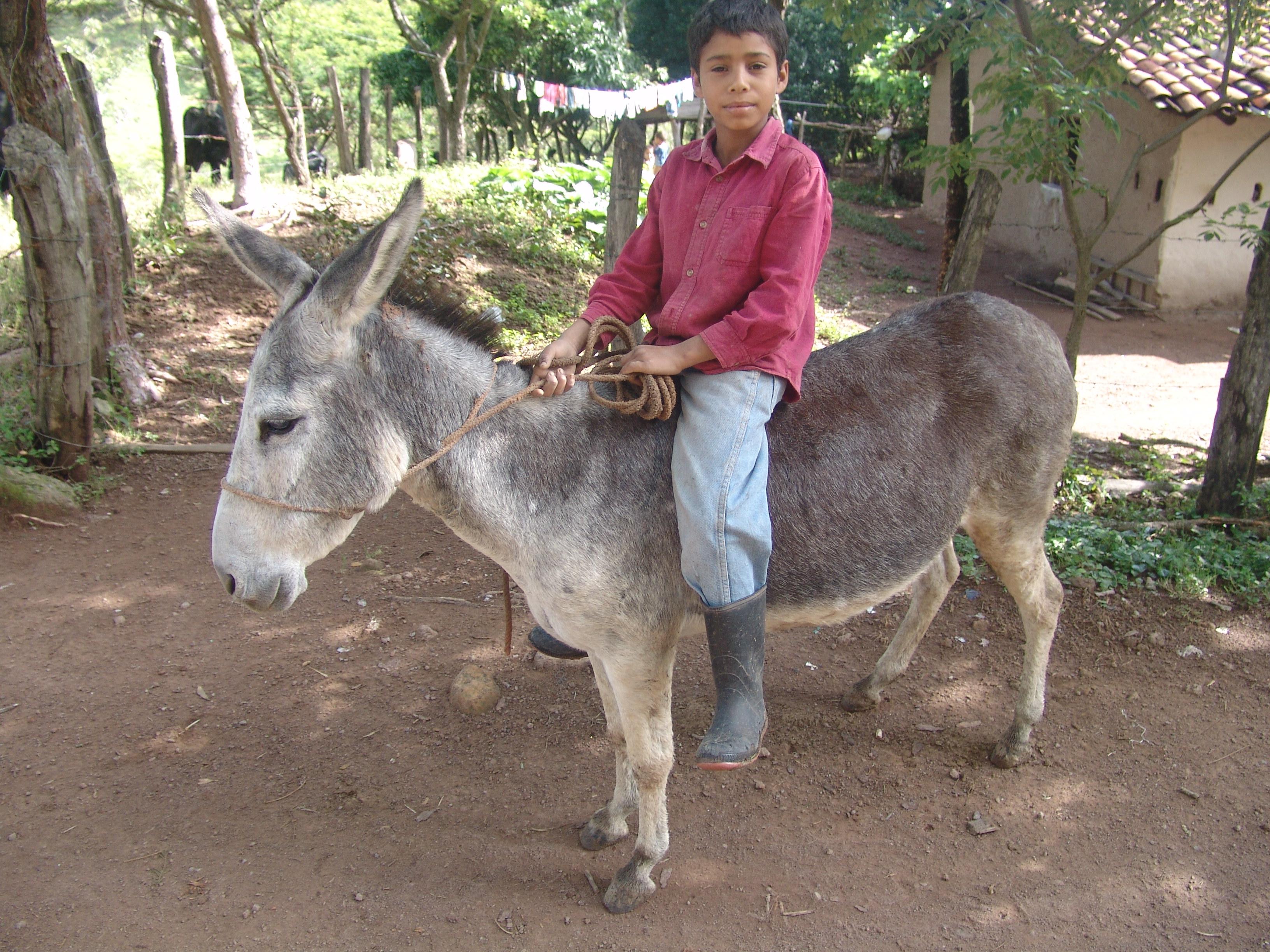 pet donkey