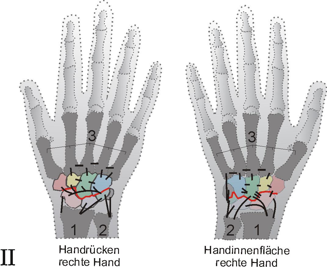 Handgelenk – Wikipedia