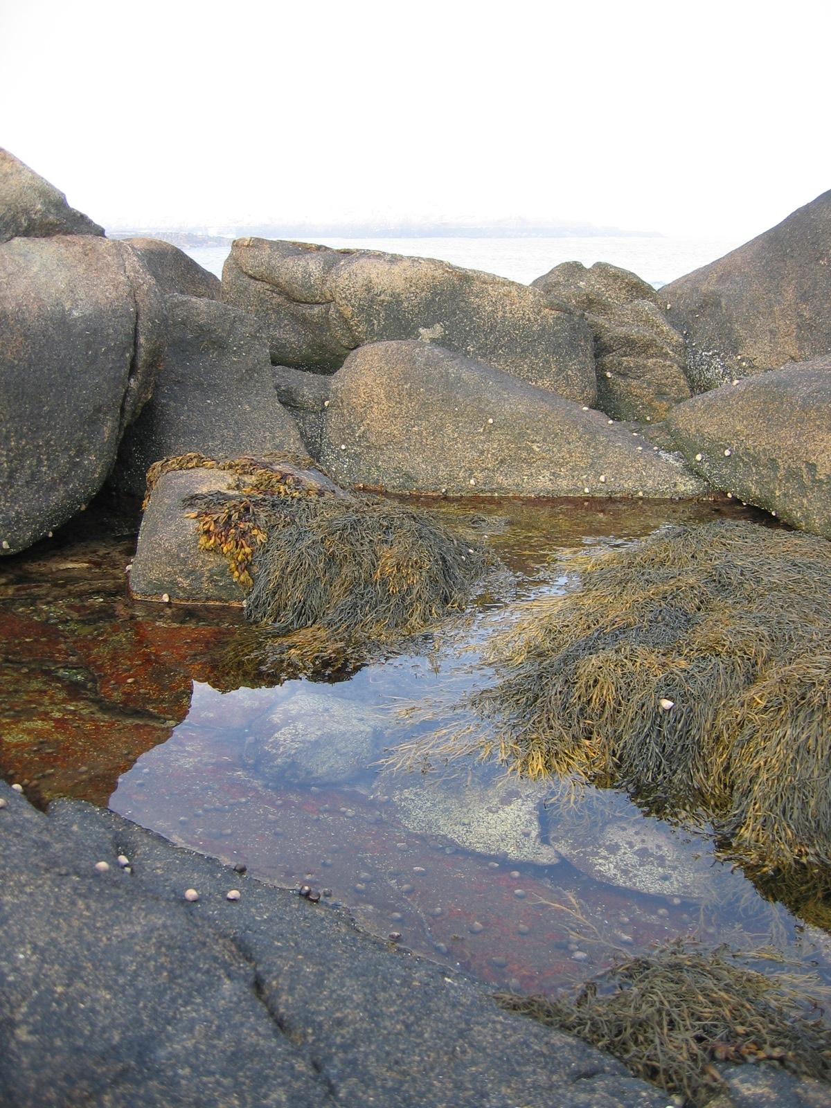 File:Harbor Tidal Pool...