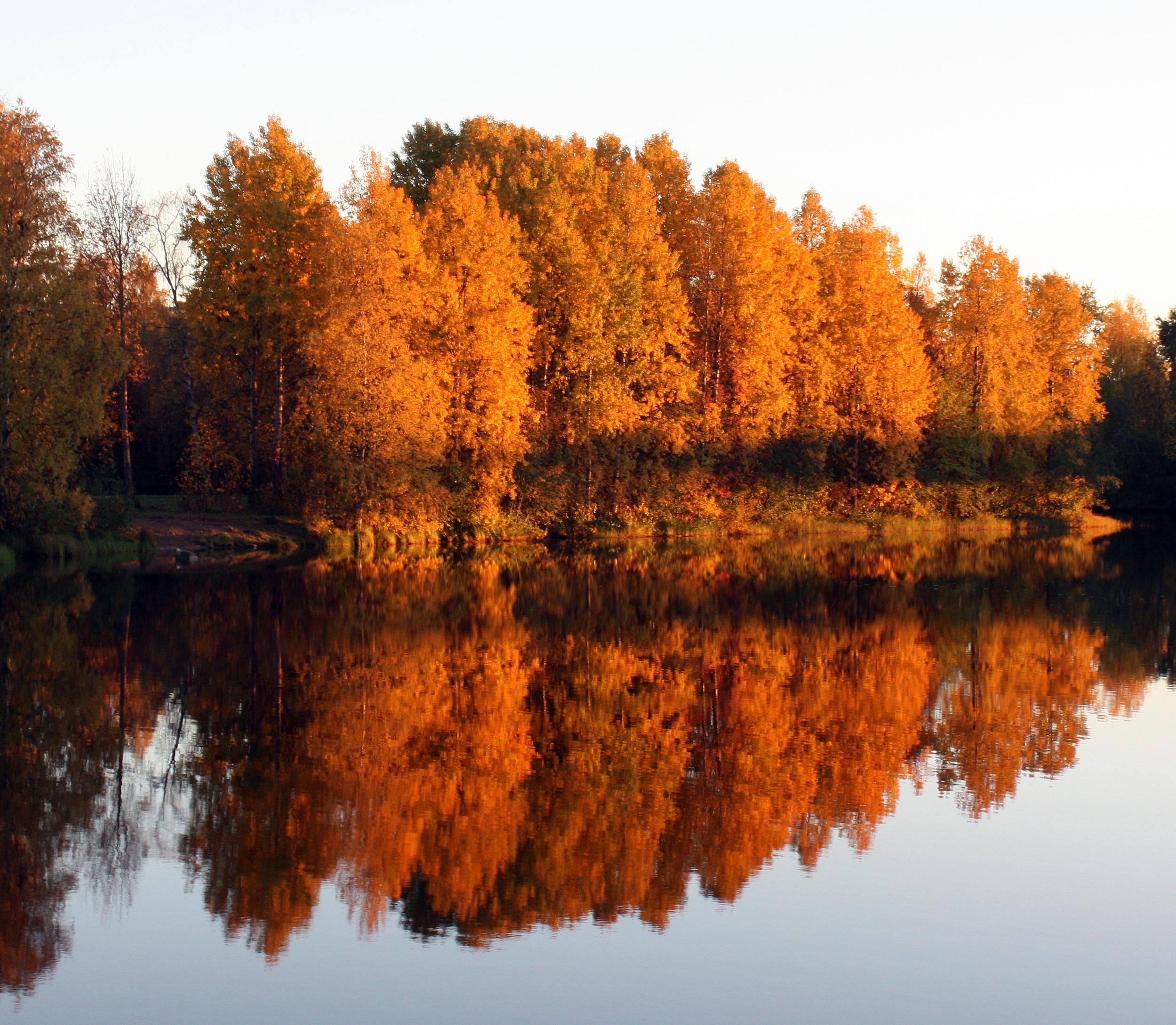 Lammassaari Oulu Wikipedia