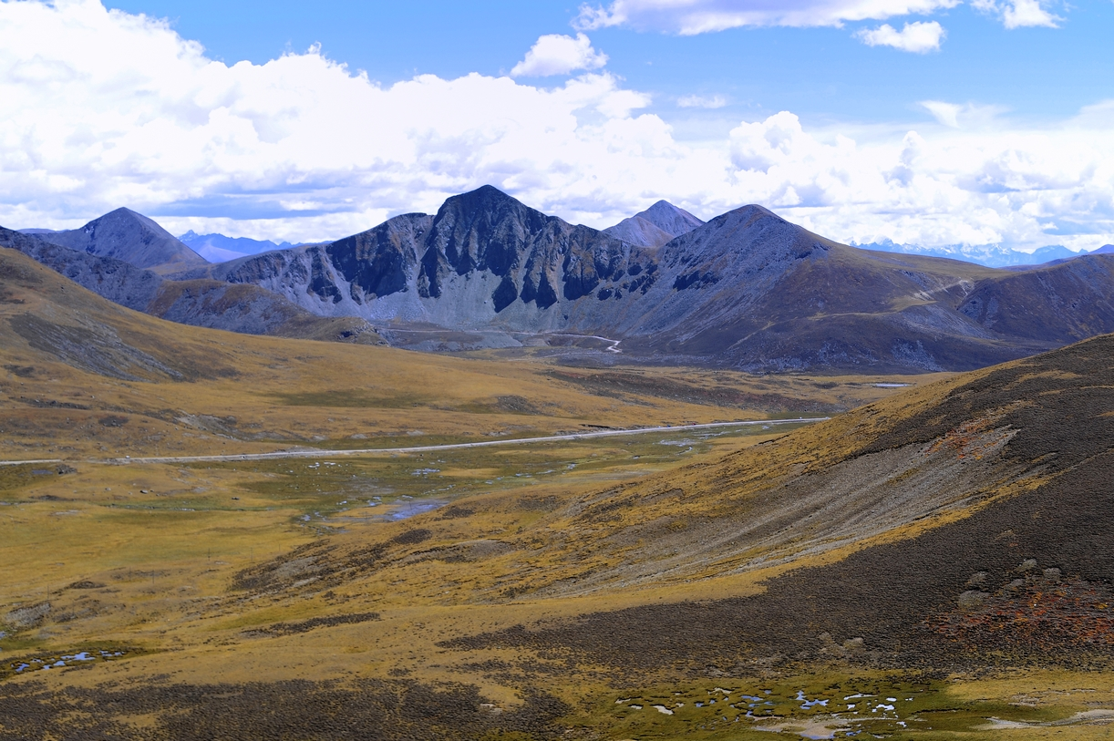 nyingchi chat sites Indehiscent sporangia enable the accumulation of local fern diversity at the qinghai-tibetan plateau  the nyingchi platygyria specimens are nested within the lepisorus clathratus complex .