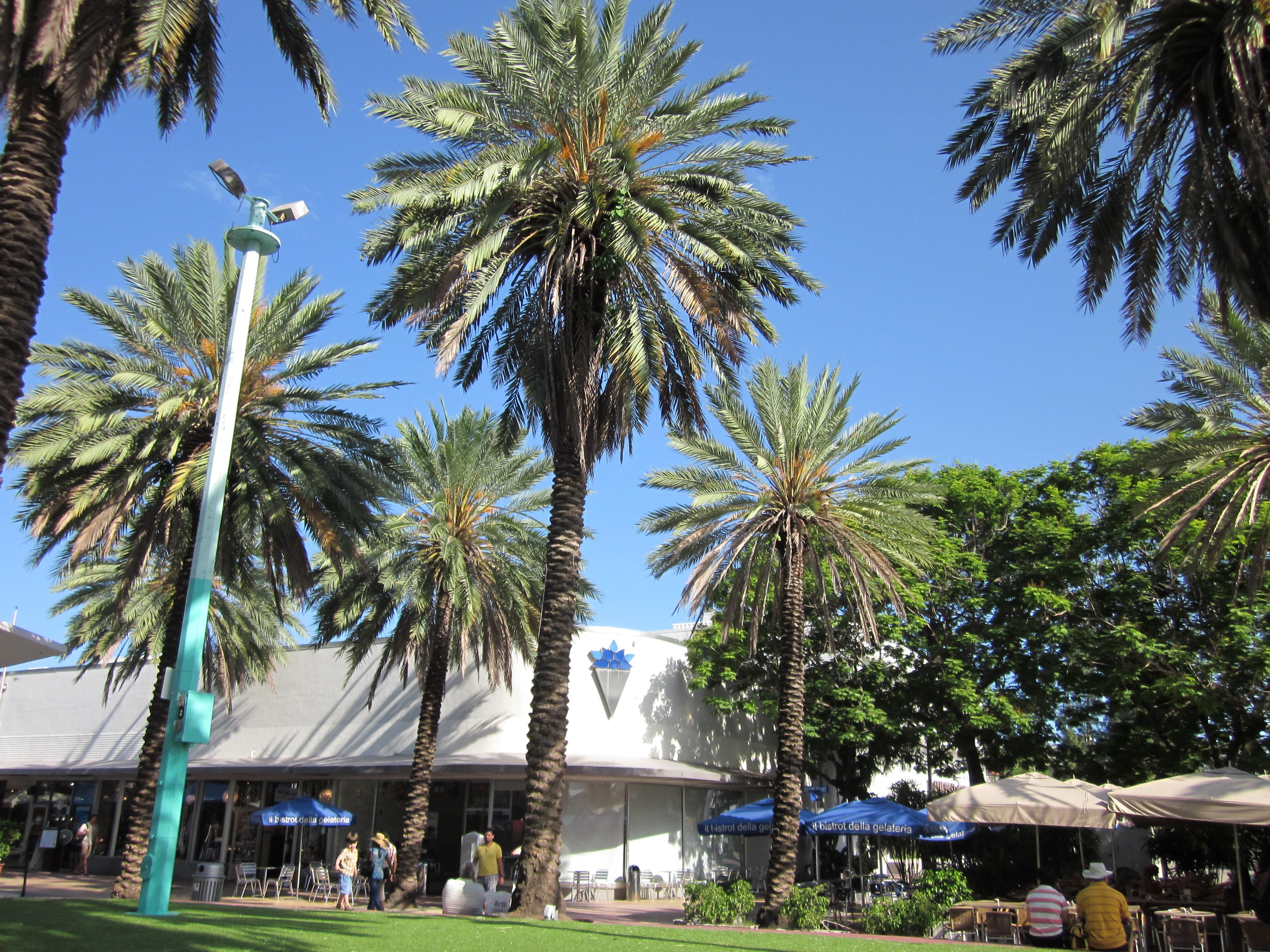 The Palms Miami Beach Restaurant