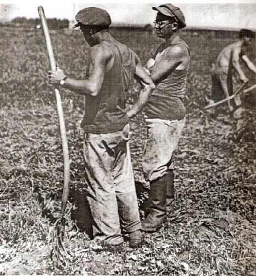עבודה בשדות קיבוץ גבעת השלושה
