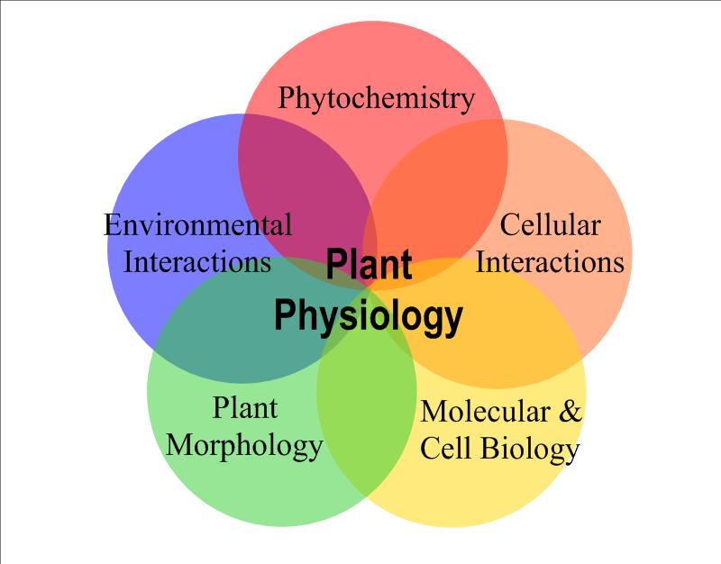Description Plant physiology.png