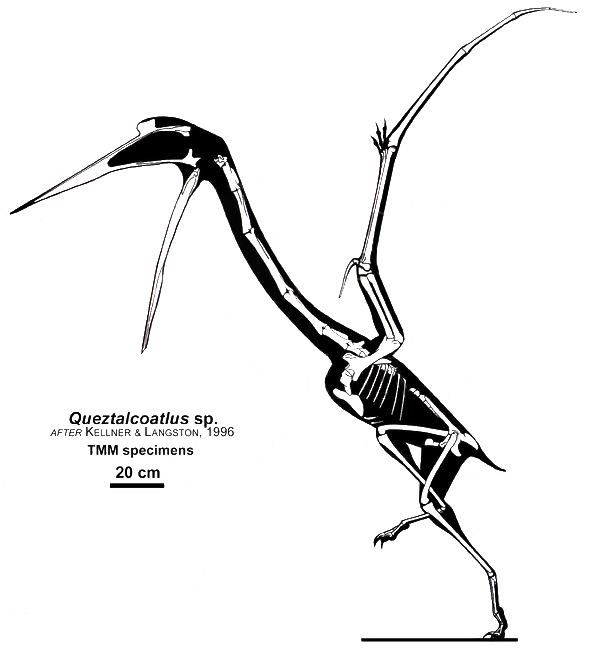File:Quetzalcoatlus sp.jpg - Wikimedia Commons