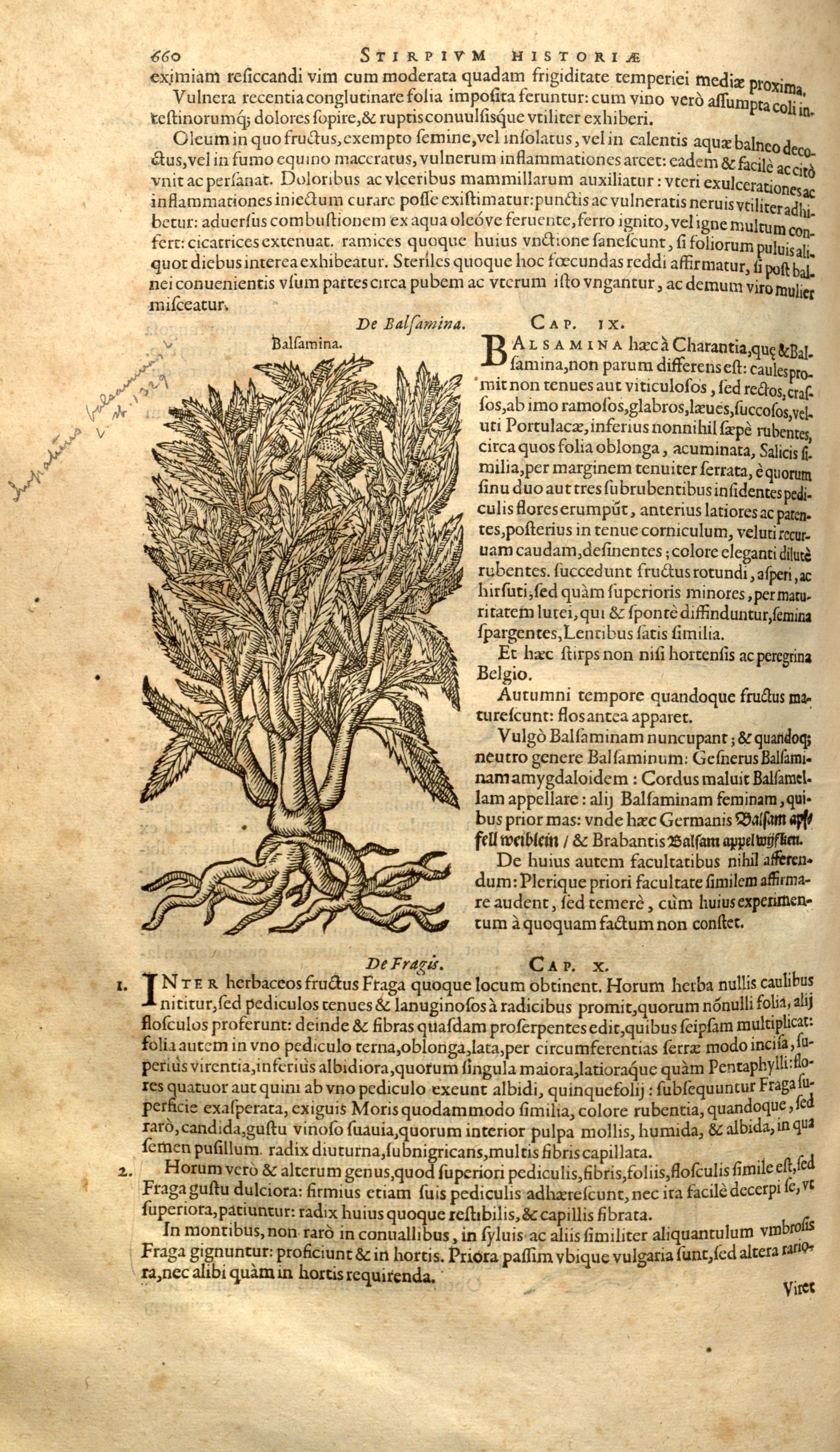 historiae pemptades sex, sive libri XXX (Page 660) BHL8100316.jpg Remberti Dodonaei ... Stirpium historiae pemptades sex, sive libri XXX. Date 1583 Source
