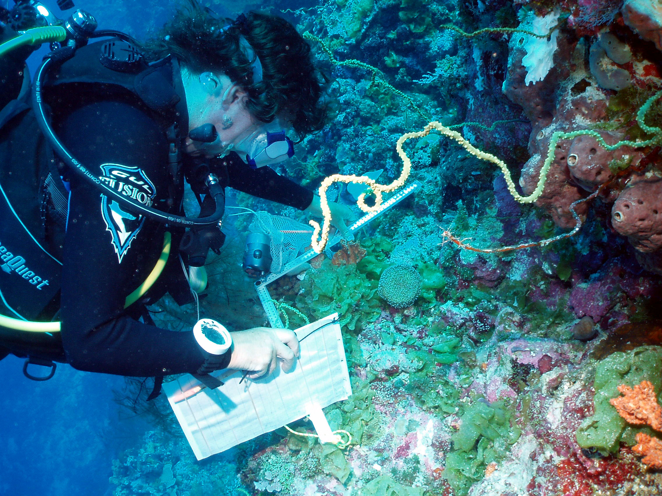 An example of a marine ecosystem being studied by a scientist.