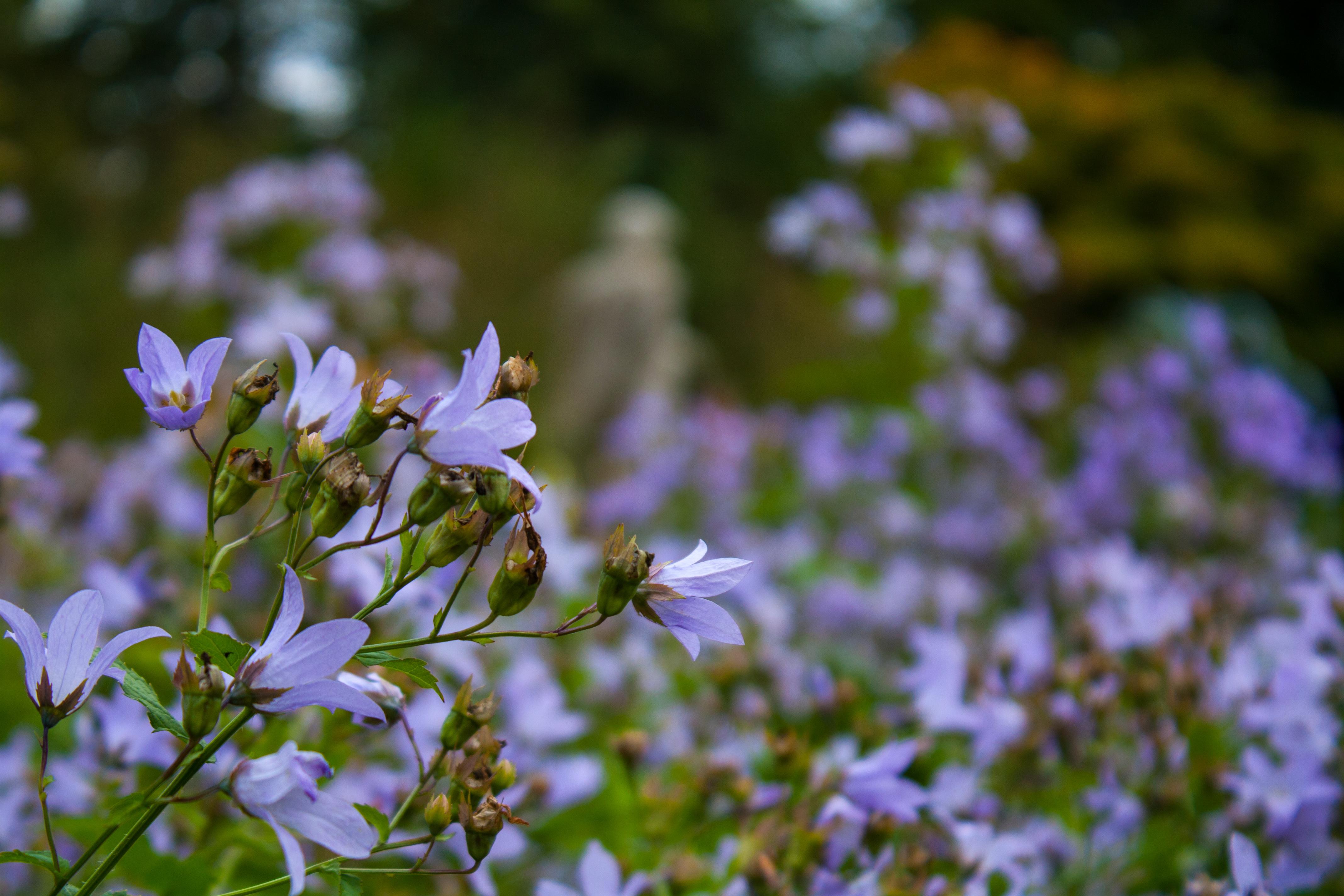 The Secret Garden Tea Rooms Chelmsford