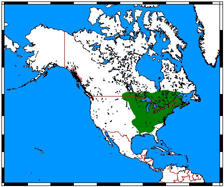 Eastern chipmunk - Wikipedia