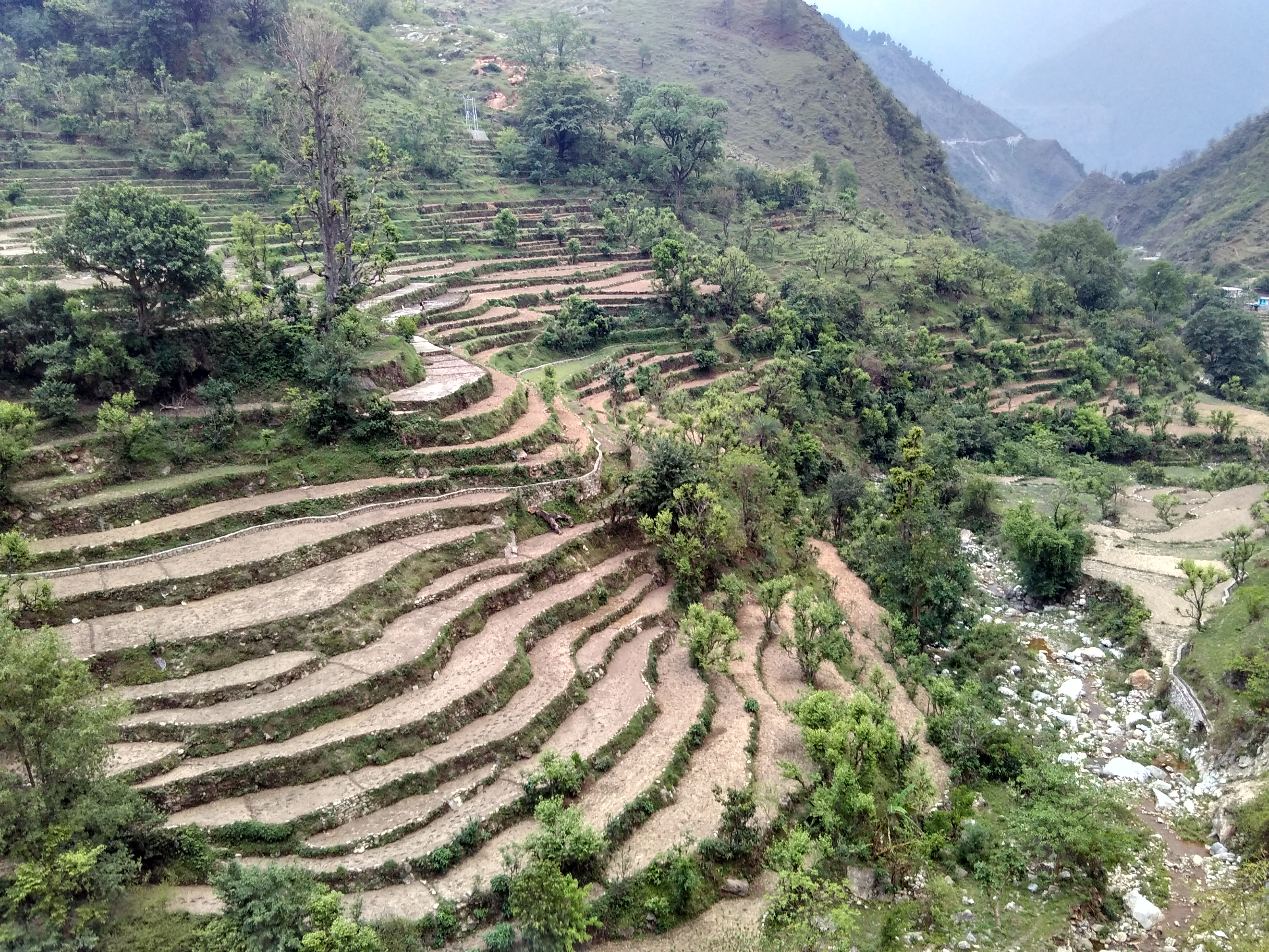File terraced farming paddy cultivation in kumaon for Terrace farming