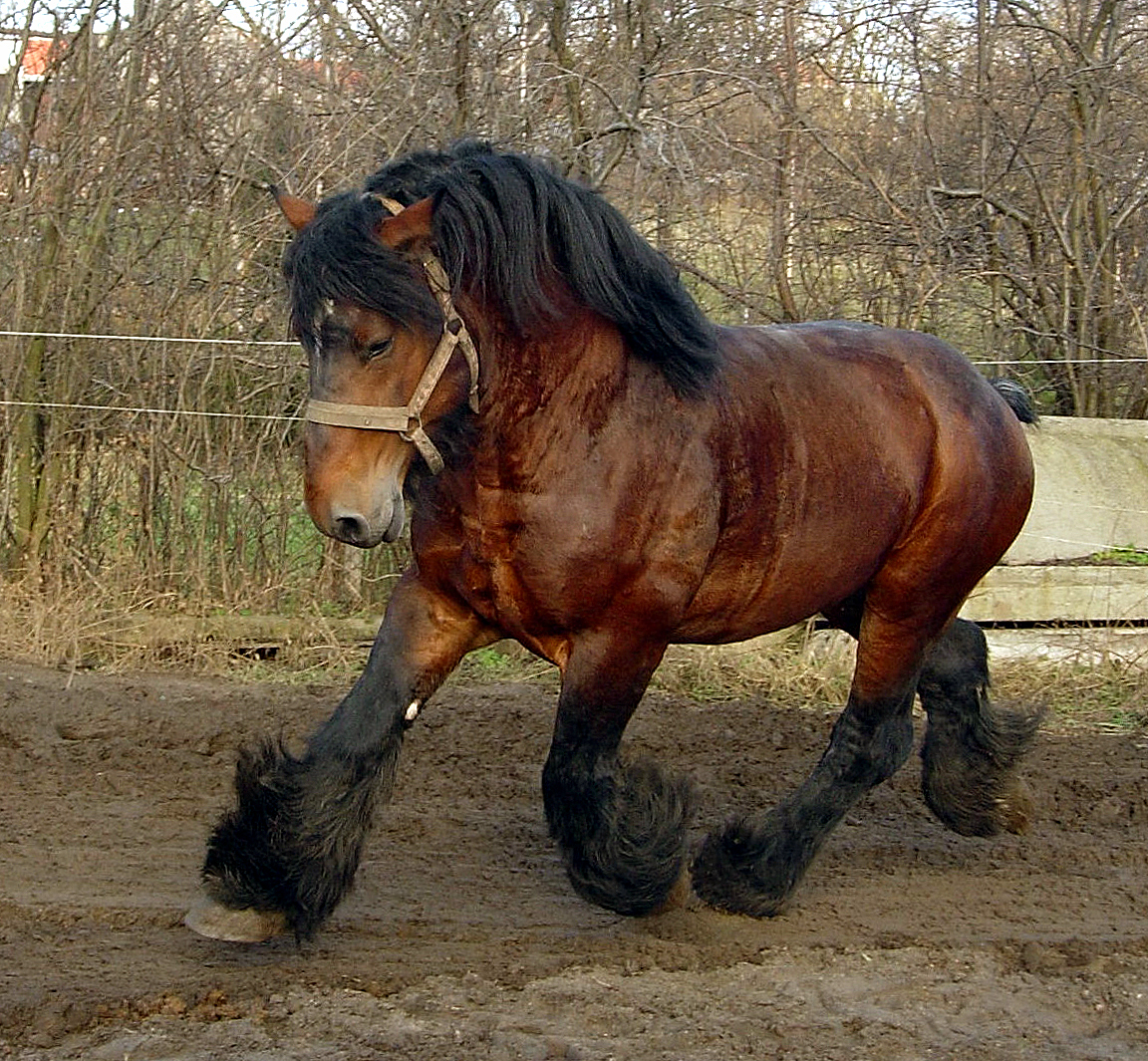 Sff Horse Breeds The Heavy Horse Tor Com