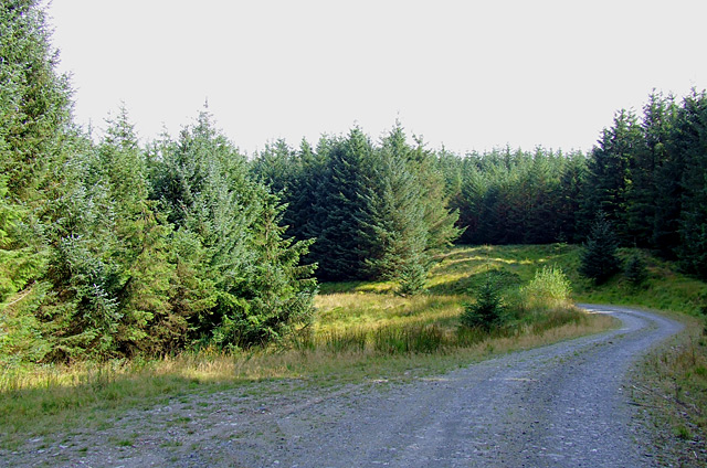 Tywi Forest road, Ceredigion - geograph.org.uk - 1510647.jpg