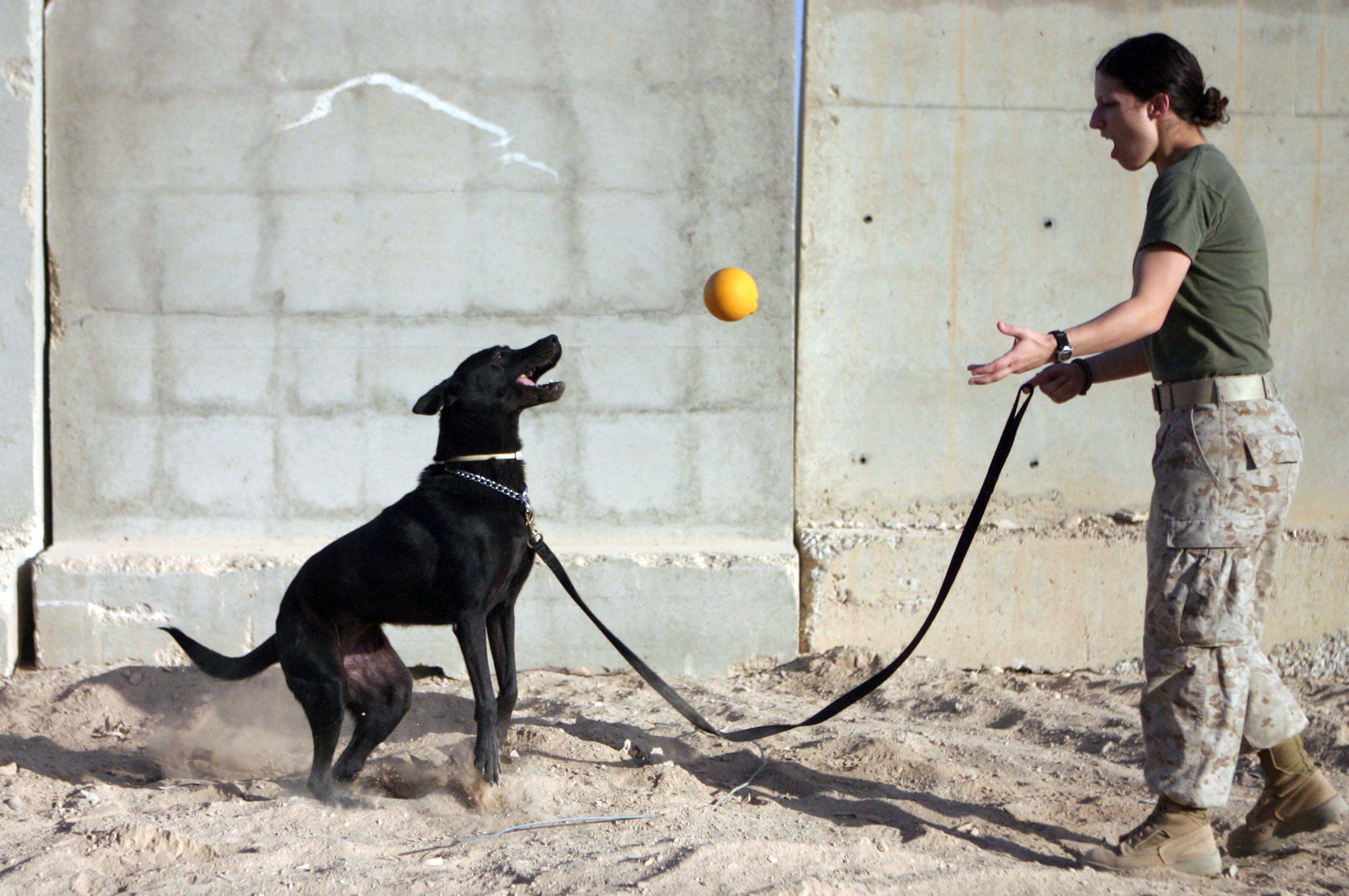 Rewards Dog Training Md