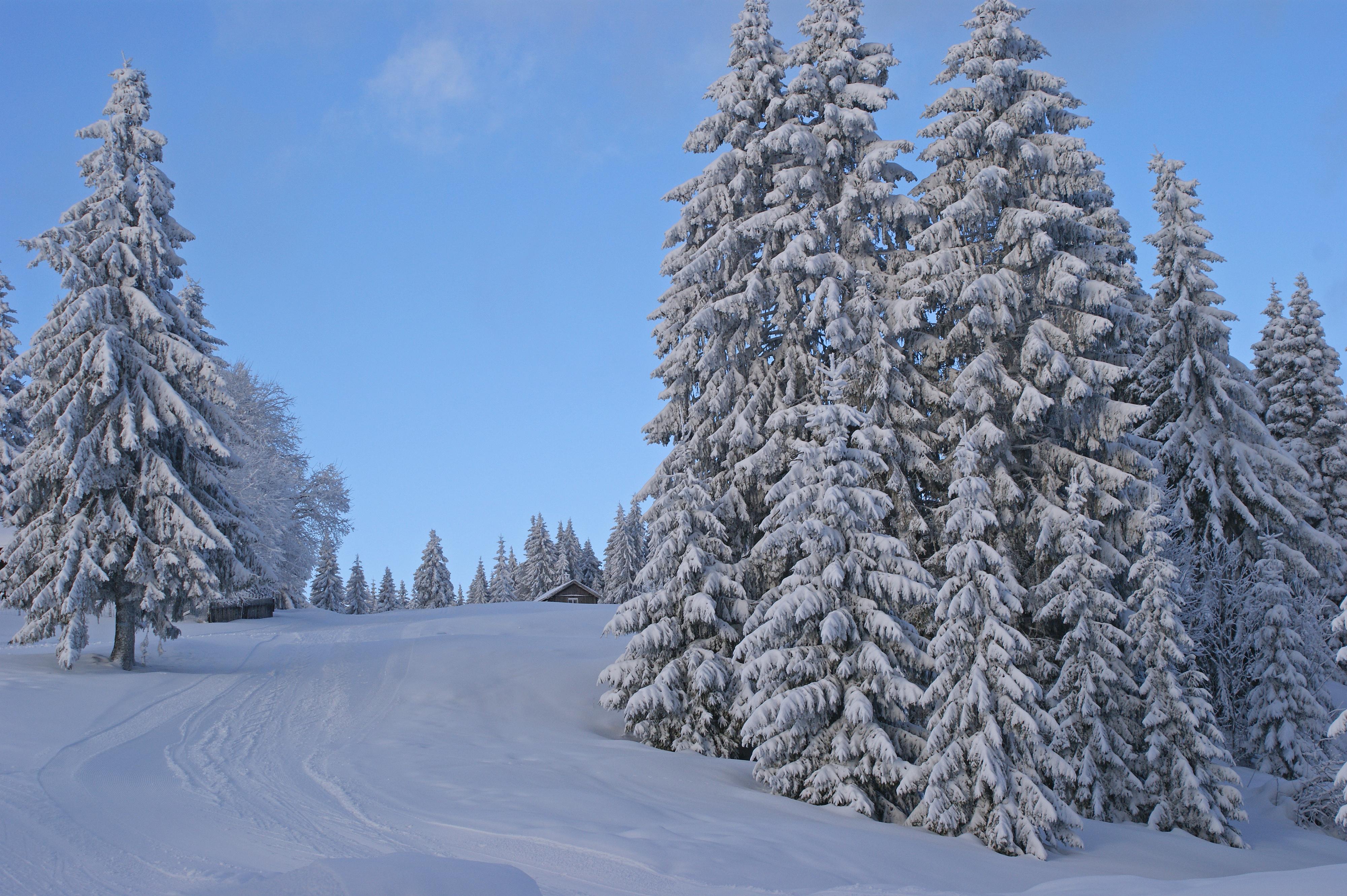 Description Winter scene (8435687527).jpg
