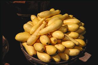 English: Yellow Squash. Polski: Kabaczek.