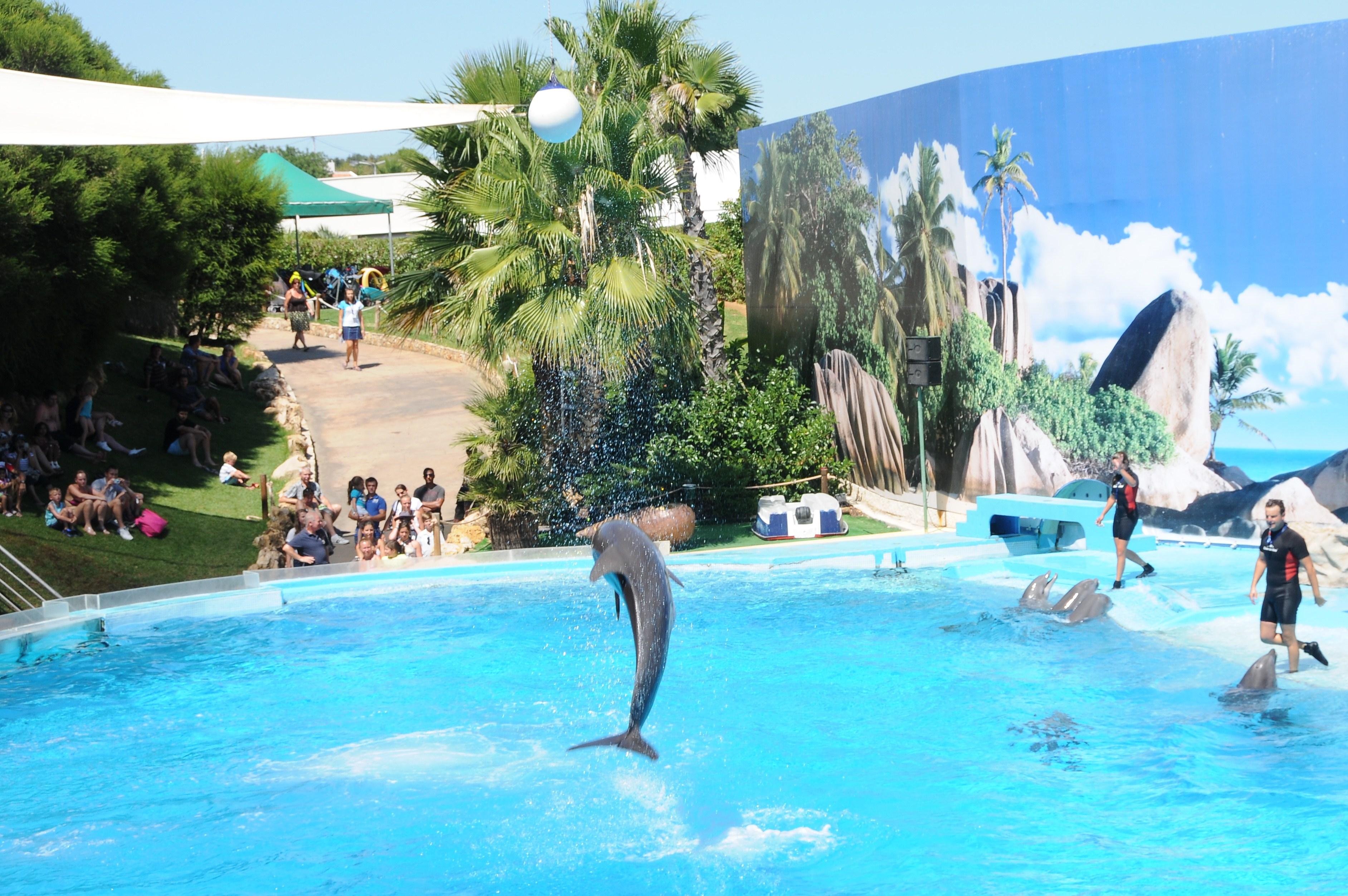 File:Zoomarine Dolphins (18).jpg