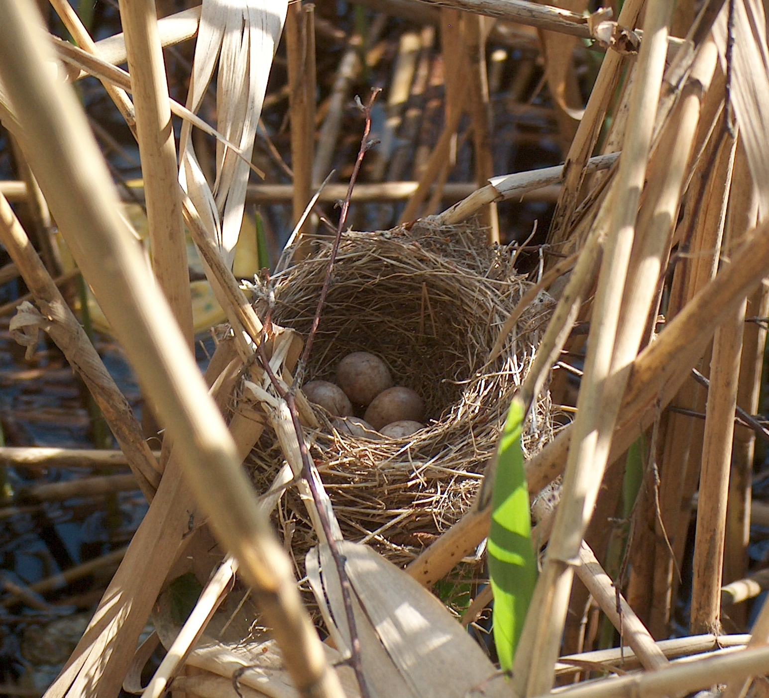 Bird nest - Wikipedia