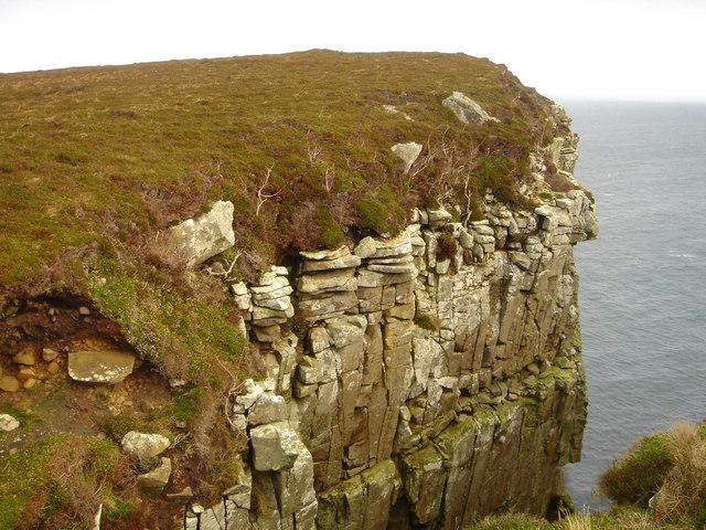 File:Aspens on Dunnet Head - geograph.org.uk - 374187.jpg