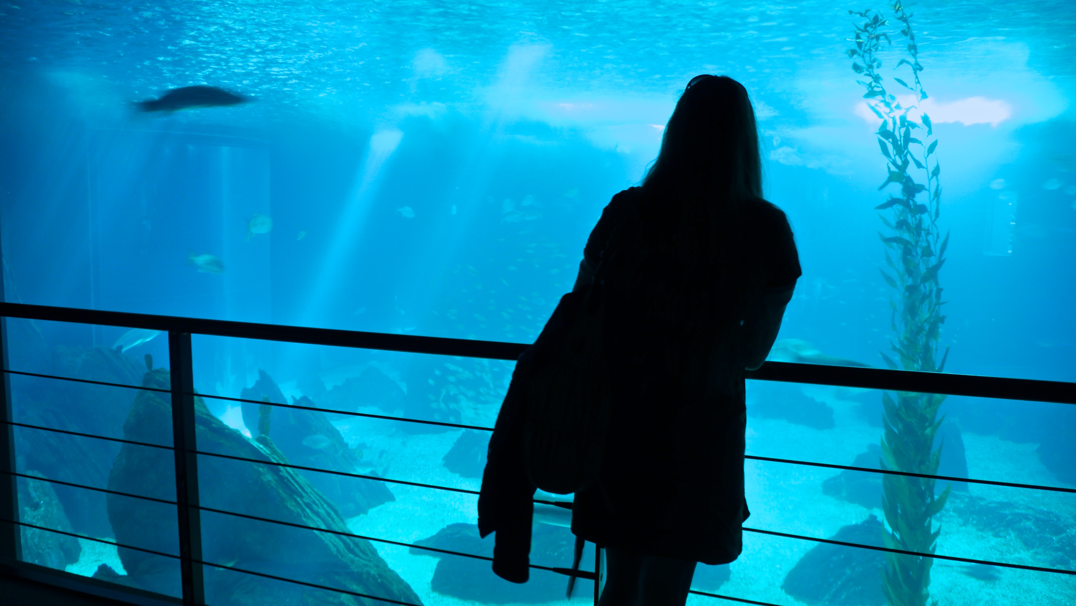 File:At Lisbon Oceanarium (5581906320).jpg - Wikimedia Commons