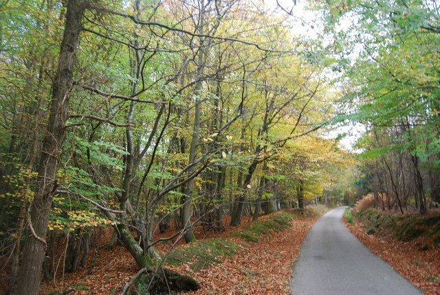 Autumn in Five Hundred Acre Wood, by the Wealdway - geograph.org.uk - 1585001
